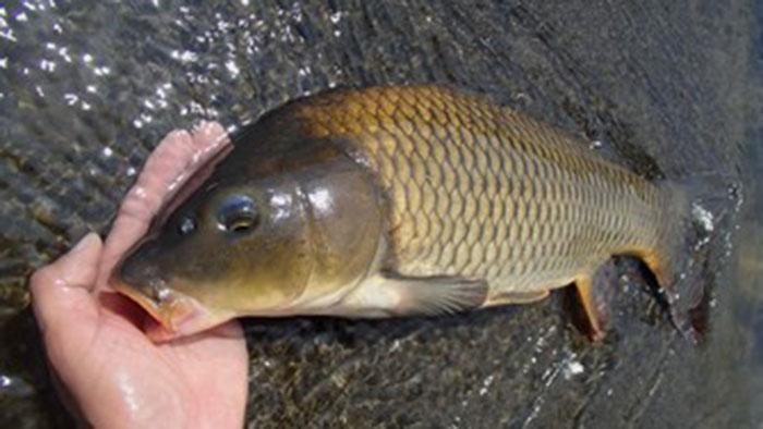 鯉釣りをしよう、6つの仕掛けの解説