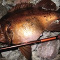 メバルを釣ろうメバリング専用ロッド・おすすめ5選
