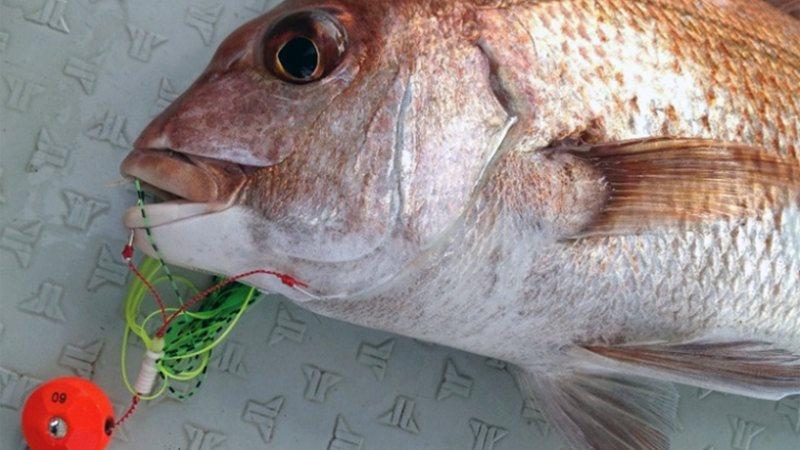 鯛ラバでマダイを釣ろう8つのポイント