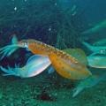 アオリイカの釣れる時期と生態を8項目で解説