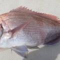 一つテンヤで真鯛を釣ろう6つのポイント