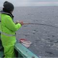 船釣りでチダイを釣ろう6つの準備